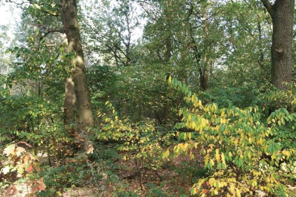 Bosgrond te koop Sevenum W22